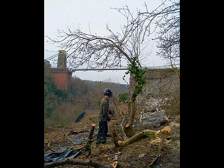 Trees and ground cover being cleared. Click on this picture to view even bigger