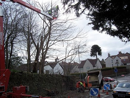 Heavy Commercial Tree Surgery Gear used by Smart Trees Ltd Bristol Tree Surgeon