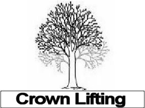 Tree Crown Lifting Services, Bristol