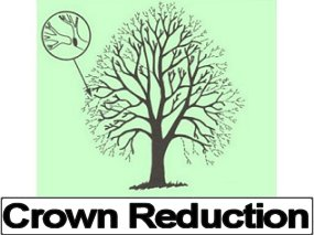 Tree Crown Reduction Services, Bristol