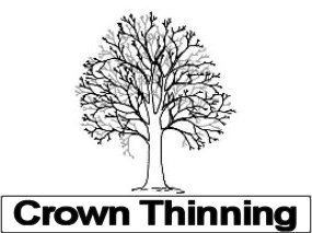 Tree Crown Thinning Services, Bristol