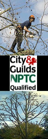 Tree Arborist and Tree Surgeons Bristol