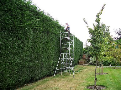 Boundary Hedge Trimming by Smart Trees Ltd Bristol Tree Surgeon