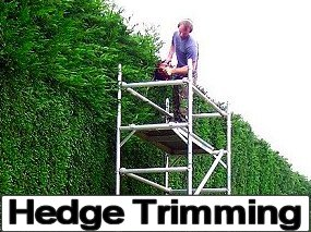Hedge Trimming Services, Bristol