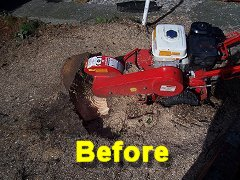 Tree Stump Grinding by Smart Trees Ltd Bristol Tree Surgeon
