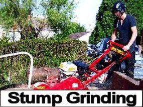 Tree Stump Grinding Services, Bristol