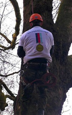 One mile tree climb in Bristol