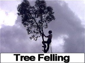Tree Felling Services, Bristol